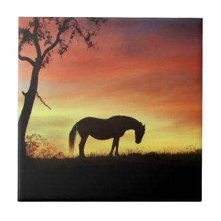 Cheval du sud-ouest de couleur dans le lever de carreau