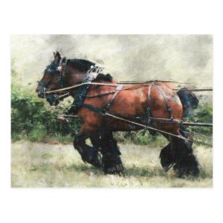 Chevaux de trait en carte postale de harnais