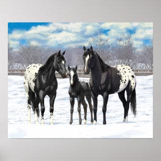 Chevaux noirs d'Appaloosa dans la neige Poster