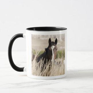 Chevaux sauvages dans le Dakota du Sud Mug