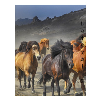 Chevaux sauvages prospectus 21,6 cm x 24,94 cm