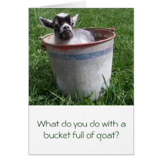 Chèvre miniature dans une carte de voeux de seau