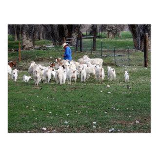 Chèvres autour de propriétaire d'un ranch carte postale