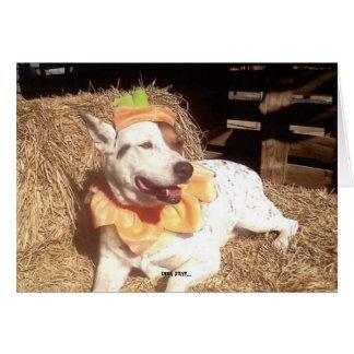 Chien, chien, drôle, amusement, humour, Luna Carte