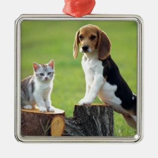 Chien de beagle et chaton tigré gris ornement carré argenté