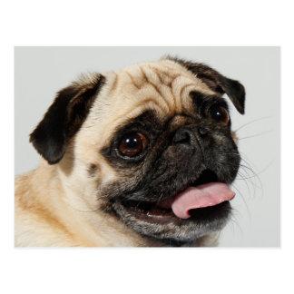 chien de carlin cartes postales