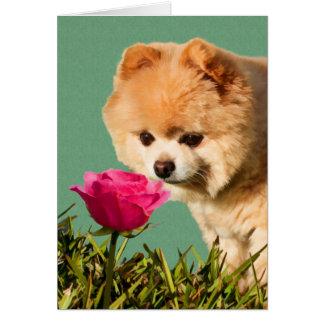 Chien de Pomeranian et carte rose