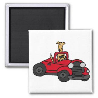 Chien drôle de lévrier conduisant la voiture rouge magnet carré