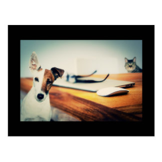 Chien et chat mignons en carte postale de bureau