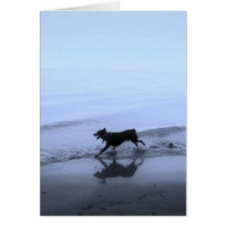 Chien fonctionnant sur la plage cartes de vœux