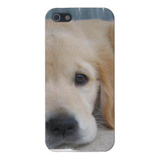 Chiens d'arrêt d'or adorables étuis iPhone 5