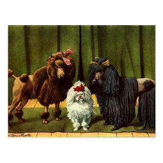 Chiens de caniche vintages carte postale