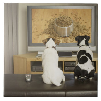 Chiens observant le plat de chien avec la nourritu carreau en céramique