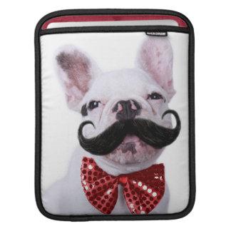 Chiot de chien de Taureau de Français avec la Poche iPad