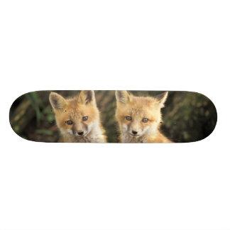 Chiot de Fox rouge devant le vulpes de Vulpes de Mini Skateboard 18,4 Cm