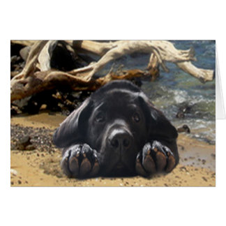 Chiot de labrador retriever sur la carte de plage