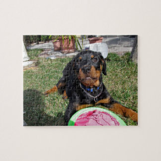 Chiot de rottweiler avec le puzzle de jouet