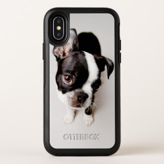 Chiot d'Edison Boston Terrier