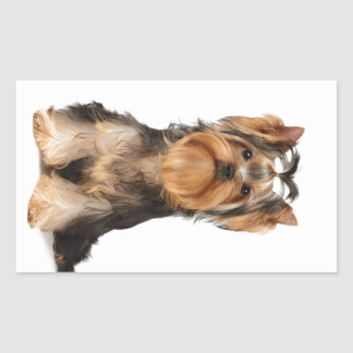 Chiot du Yorkshire Terrier Sticker Rectangulaire