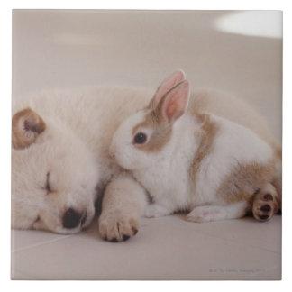 Chiot et lapin carreaux