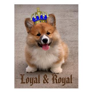 Chiot loyal et royal de corgi carte postale