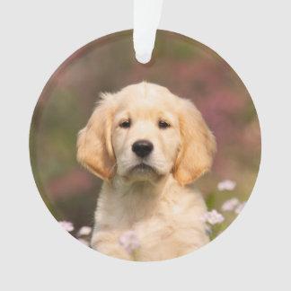 Chiot mignon de chien de golden retriever -