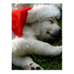 Chiot mignon de Labrador avec le chapeau de Noël Cartes Postales