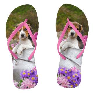 Chiot tricolore mignon de chien de beagle dans un tongs