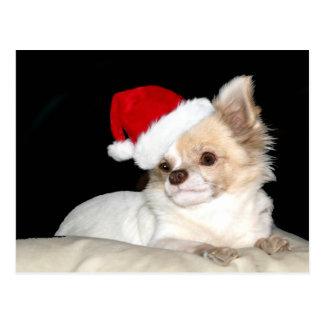 Chiwawa dans un chapeau de Père Noël Cartes Postales