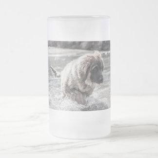 Chope Givrée Leonberger congelé