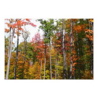 Chute dans la photographie colorée d'automne de