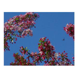 Ciel bleu de fourmi carte postale