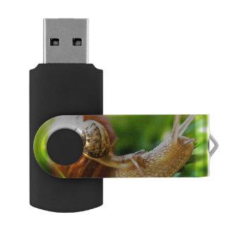 Clé USB Escargots