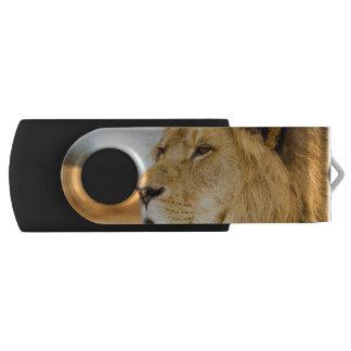 Clé USB Grand lion regardant loin