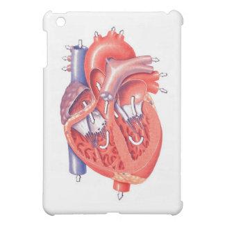 Coeur humain étuis iPad mini