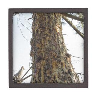 Coffret Cadeau De Première Qualité Résine de pin sur le tronc