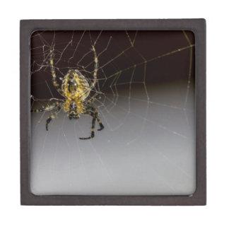 Coffret Cadeau De Première Qualité Une araignée et sa de Web fin