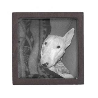 Coffrets Cadeaux De Première Qualité Bull-terrier anglais blotti sous une couverture -