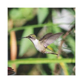 Colibri, copie enveloppée de toile
