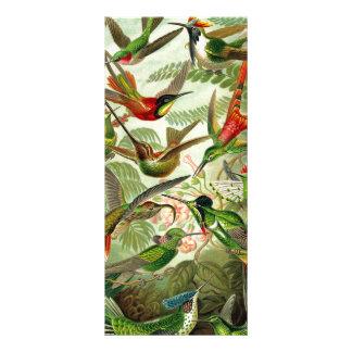 Colibri de Trochilidae d'Ernst Haeckel Cartons D'informations 10 Cm X 22,9 Cm