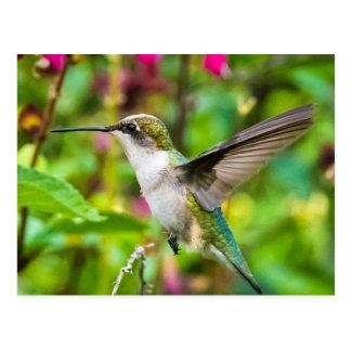 Colibri en vol carte postale