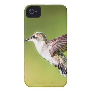 Colibri en vol étui iPhone 4