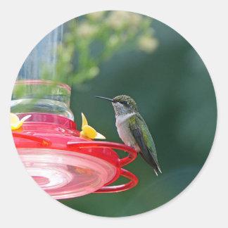 Colibri été perché sticker rond