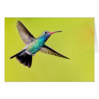 Colibri large-affiché par mâle en vol carte de vœux