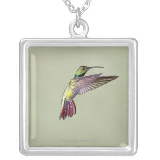 Colibri Vert-breasted Anthracocorax 2 de mangue Collier