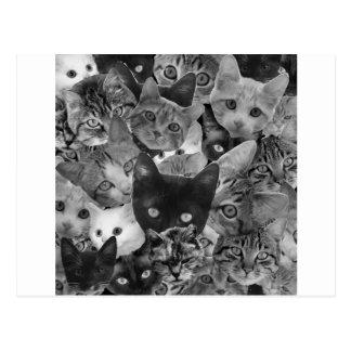 Collage de chat de BW Carte Postale