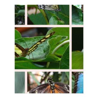 Collage de papillon prospectus 21,6 cm x 24,94 cm