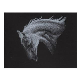 Collection de cheval de fantôme carte postale