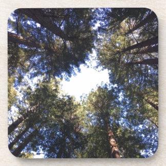 Collection en bois rouge d'arbre de séquoia dessous-de-verre