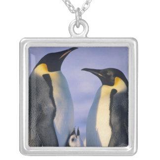 Collier Adultes de pingouins d'empereur (forsteri
